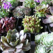 planten voor in Mobiel windscherm